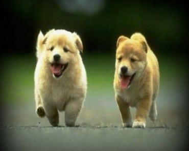 imagenes tiernas de perritos 370x297 Imagenes tiernas de perritos